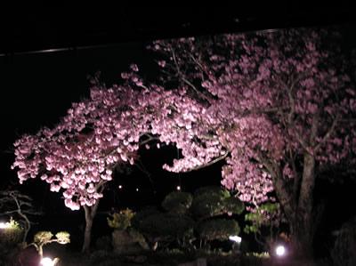 sakura2005N